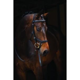 http://horseandrider.co.uk/1016-1933-thickbox/horseware-rambo-micklem-diamante-competition-bridle.jpg