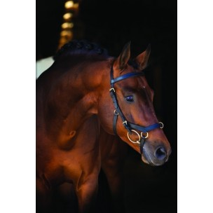 http://horseandrider.co.uk/1017-1935-thickbox/horseware-rambo-micklem-deluxe-competition-bridle.jpg