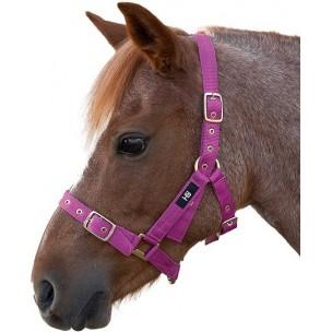 http://horseandrider.co.uk/1053-2167-thickbox/hy-holly-fully-adjustable-head-collar.jpg