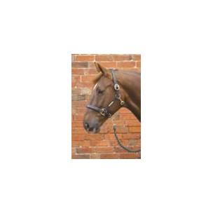 http://horseandrider.co.uk/315-431-thickbox/hy-leather-head-collar.jpg