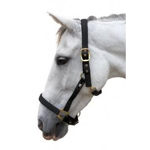 http://horseandrider.co.uk/316-1516-thickbox/hy-classic-head-collar-.jpg