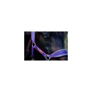 http://horseandrider.co.uk/873-1184-thickbox/rambo-gp-padded-head-collar-dhag40.jpg