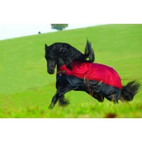 Amigo Mio Lite T/O Horse Rug with L/A (AASA91)