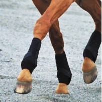 Dalmar Hind Eventer Boots
